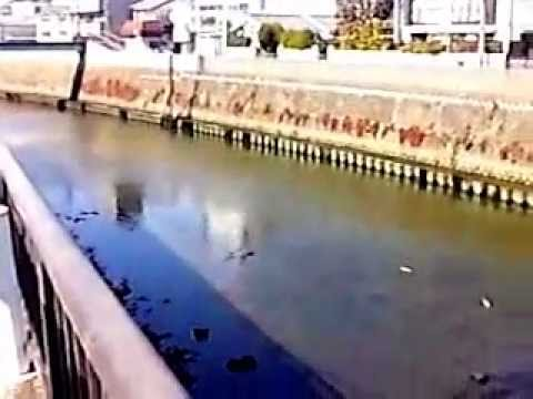 神奈川県横須賀市二級河川平作川...
