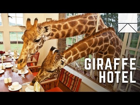 Thumbnail: Eating Breakfast With Giraffes In Africa