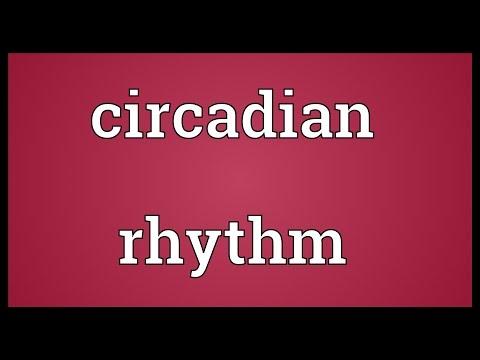 Circadian rhythm Meaning