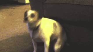 techno dog dancing to live at dominoes by the avalanches