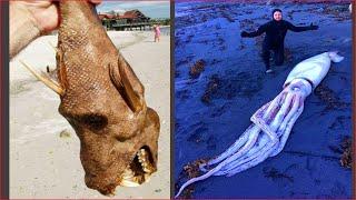 Ловля морепродуктов 🦀🐙 Глубоководный осьминог (поймать краба, поймать рыбу) #62