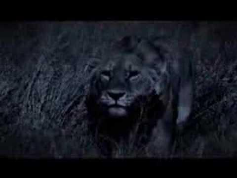 Interpol - Heinrich Maneuver (Big Cats)