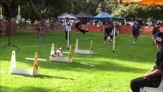 Australia Day Flyball