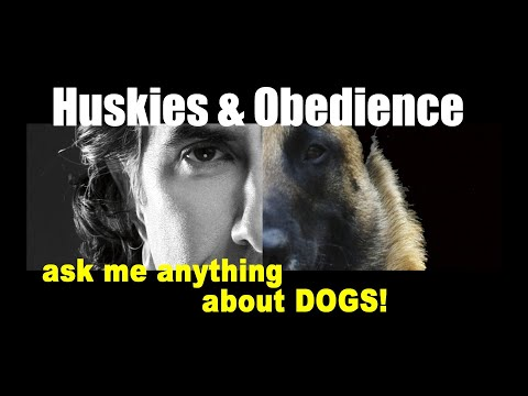 Can RECALL Be Taught to 2 Rescue HUSKIES - ask me anything - Dog Training Video