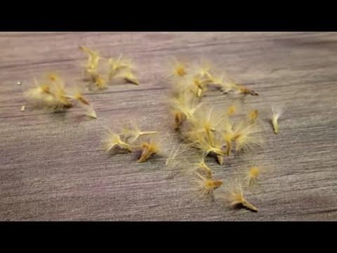 Oleander Seeds! || Birdsnest Fern || Watering Plants || ZipWall Zipper Doors on The Garden Bubble!