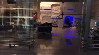 О скотском отношении к людям в Аэропорте Внуково