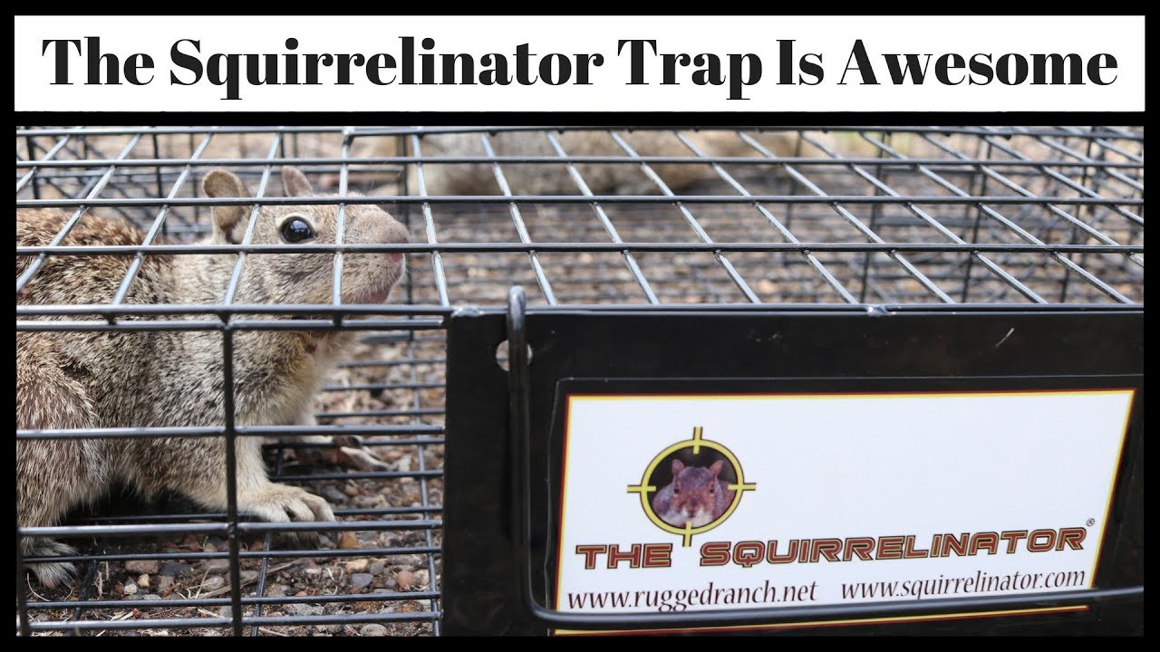 The SQUIRRELINATOR Squirrel Trap Is Awesome - Best Ground Squirrel ...