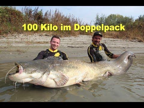 """Große Fische am laufenden Band """"100 Kilo Waller im Doppelpack"""" Welsangeln am Fluss"""