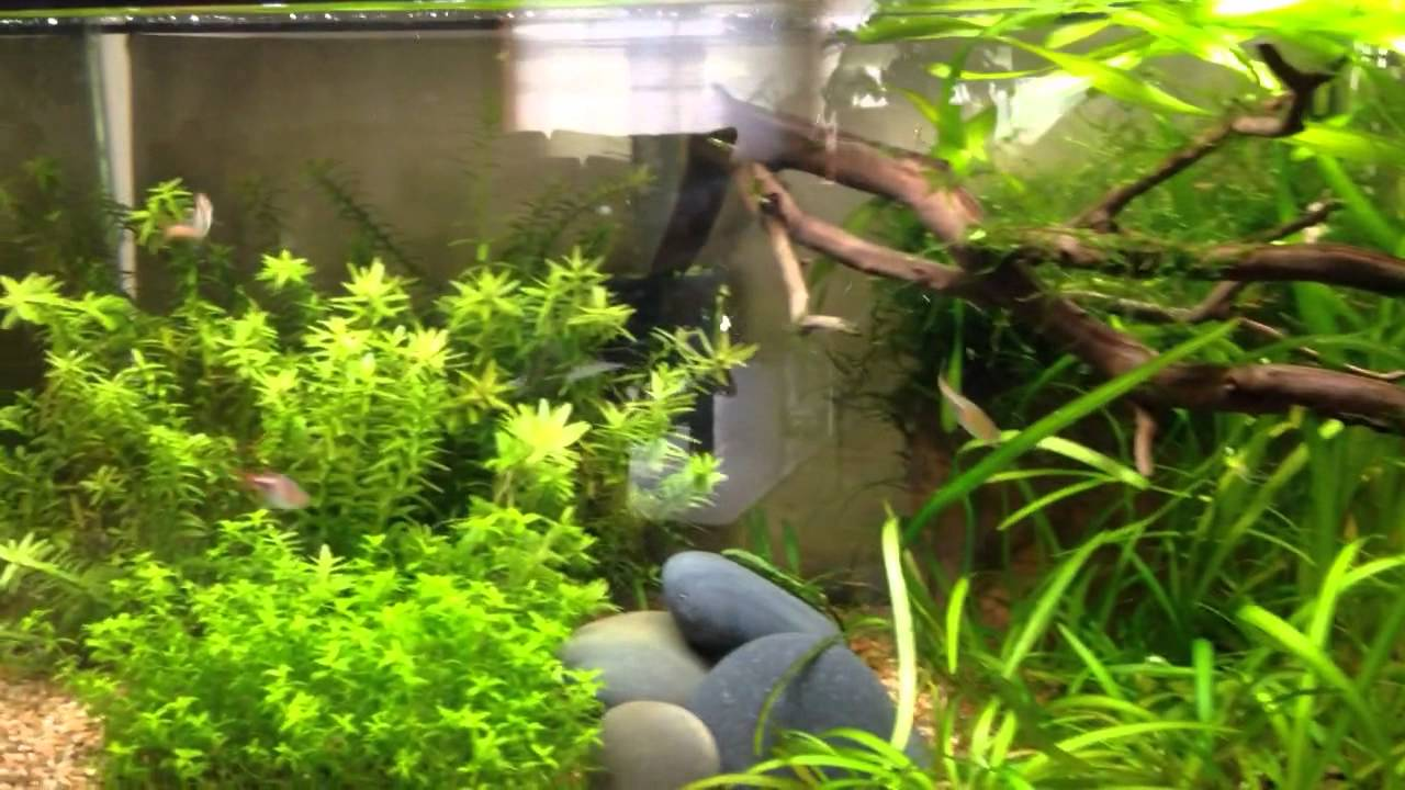 airstone vs powerhead circulation pump in the planted tank youtube