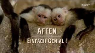 Affen - einfach genial! 1-3