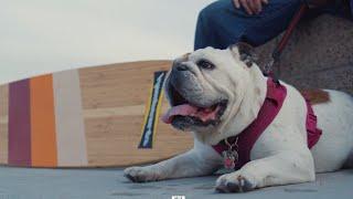 Dog Skateboard Henny Rides Hamboards Thanks To Happy Again