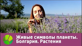 Болгария. Растения | Живые символы планеты | Живая Планета