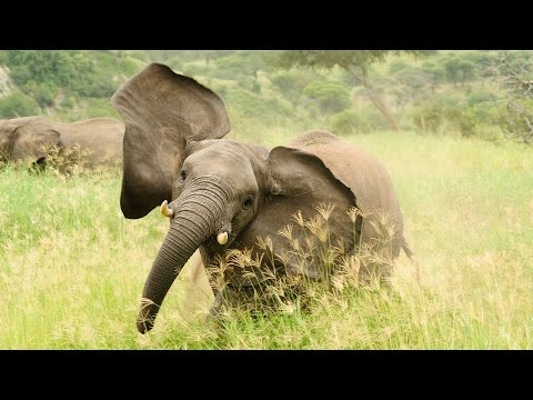 Tackling Ivory Poaching and Wildlife Trafficking in Niassa Reserve