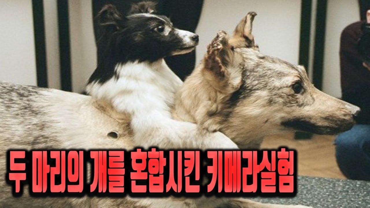 소련의 천재의사 블라디미르데미코프의 괴짜실험(Vladimir Petrovich Demikhov's Two-Headed Dog)