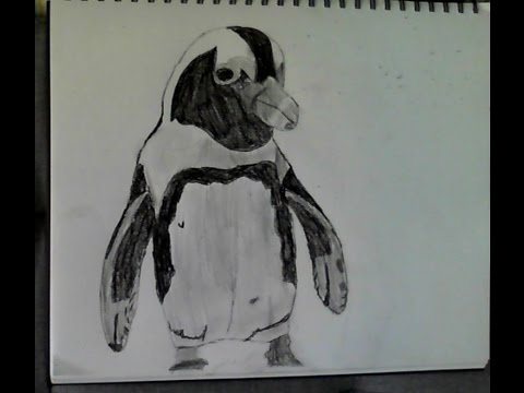 Drawing an African Penguin