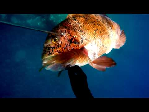 CANARY ISLANDS SPEARFISHING