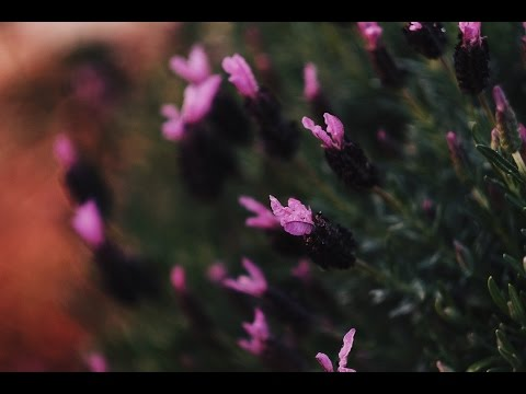 How do I shoot macro flowers using Fujifilm X-T2 56mm F1.2