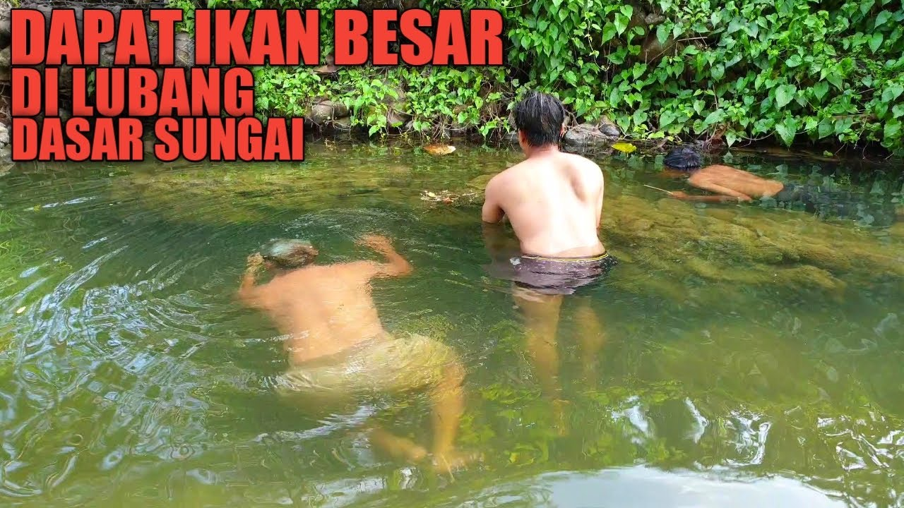Tangkap Ikan Besar Di Lubang Dalam Dasar Sungai