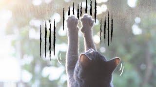 고양이 발톱에도 쉽게 찢어지는 방충망! 안전하게 예방하는 방법