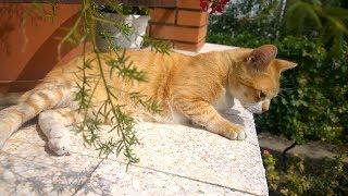 Relaxing Cat Video 6