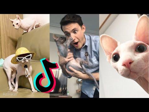 Funny Sphynx Cat😹 [HAIRLESS CAT TIKTOK COMPILATION] ~Part 1