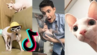 Funny Sphynx Cat😹 [HAIRLESS CAT TIKTOK COMPILATION] ~Part 1