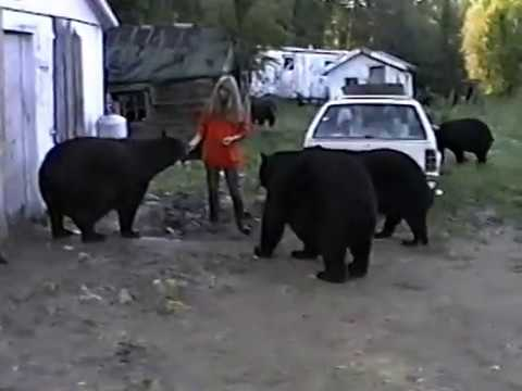 Minnesota black bears and people safe zone 1994