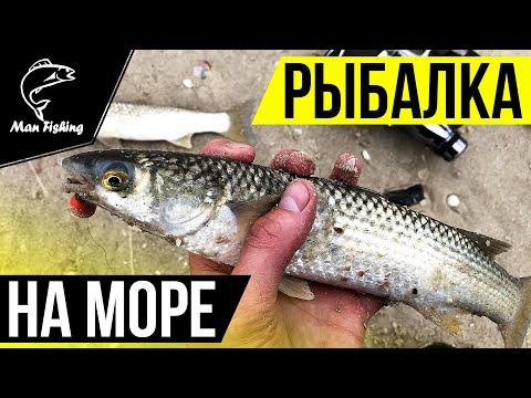 Ловля ПЕЛЕНГАСА с берега на НЕРЕИСА! Рыбалка на Азовском море!