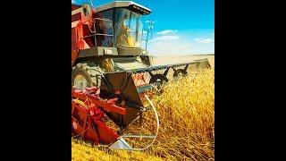 #687. Сельское хозяйство (Еда и напитки)