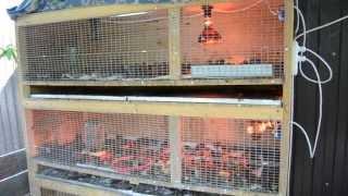 Цифровой брудер для домашней птицы,перепелят, цыплят,индюшат,утят.(, 2013-07-25T13:39:05.000Z)