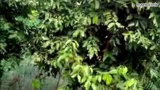 Wahiba:Mkukima wa viungo (Mdarasini,Karafuu nk)-Morogoro