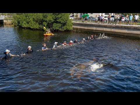 Maria - #GoodNews: Dolphins Stranded In Canal Saved By Human Chain Of Rescuers