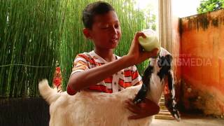 Video DUNIA BINATANG - RAHASIA SI KAMBING (6/3/17) 3-1 download MP3, 3GP, MP4, WEBM, AVI, FLV Oktober 2017