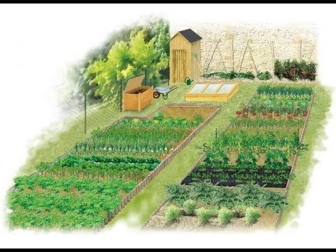 Les principes de la rotation des légumes au potager