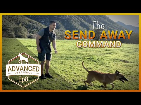 How to Teach Your Dog the Send Out/Send Away Command