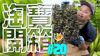 【淘寶開箱】初次植物篇   究竟存活率有幾多   花草樹木   SUTEKI@PLAY U