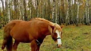 Собака и лошадь. Басня И. Крылова