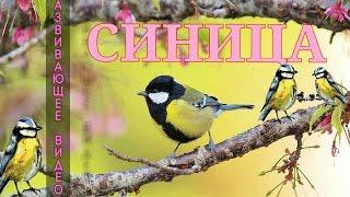 аудиоэнциклопедия голоса птиц и зверей расширенными