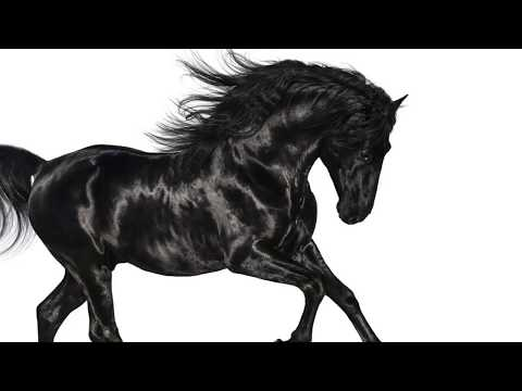 Old Town Road- Lil Nas X ft. Billy Ray Cyrus Remix