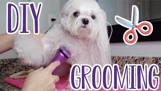 How To Groom Your Dog At Home | Dog Haircut | Maltese Dog Grooming