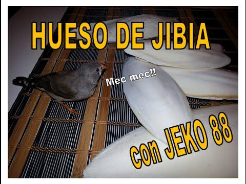 HUESO DE JIBIA Y SUS PROPIEDADES - YouTube