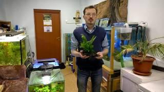 голландские растения - эпизод 1: Гиганты наступают!