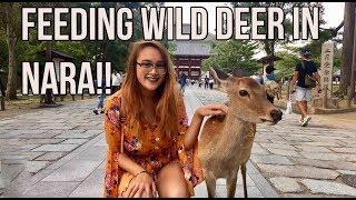 JAPAN: KYOTO VLOG   Ancient Japanese Temples, Bowing Deer in Nara