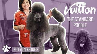 Grooming Vuitton the Standard Poodle with snapon combs | Kitty Talks Dogs   TRANSGROOM