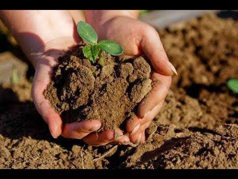 Čo obsahuje pôda? Neživá príroda #svetradskumam