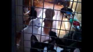 Комната кошек в приюте Майский день (Иваново)