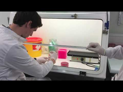 Microbiology - Blood Cultures