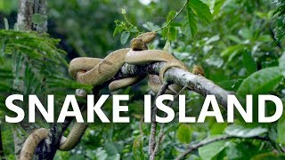 Mysterious Island | World's Most Deadly Island | brazil