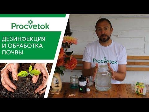 Вопрос: Как подготовить почву для томатов, чтобы уберечь их от гнили?