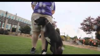 Fort Collins Dog Trainer Aggression Bulldog